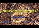 ¿Cómo caza el ciempiés? Do you know how it hunts a centipede? | Recurso educativo 772818